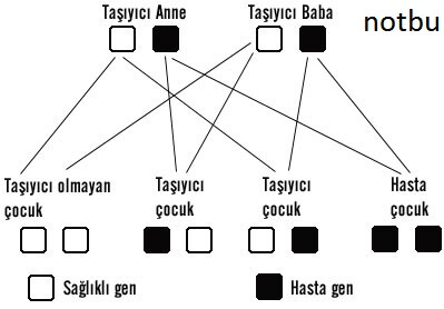 resesif gen