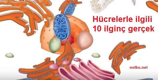 Hücrelerle ilgili ilginç bilgiler