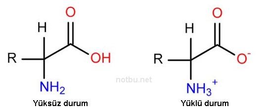 Amino asit yapısı