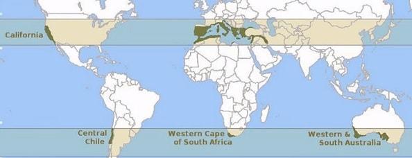 Akdeniz iklimi haritası