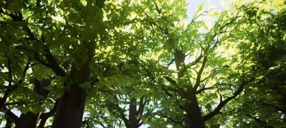 yayvan yapraklı ormanlar
