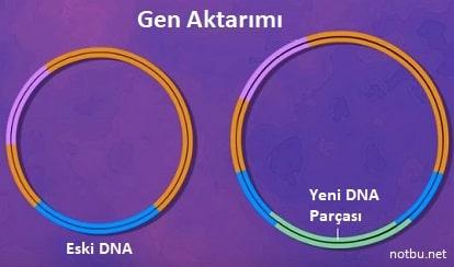 Gen aktarımı nedir