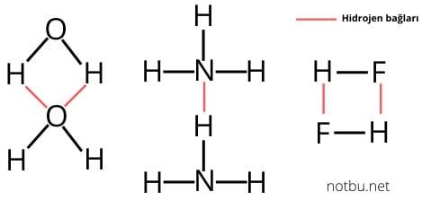 Hidrojen bağı örnekleri