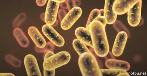 Mikroskobik canlıların yararları