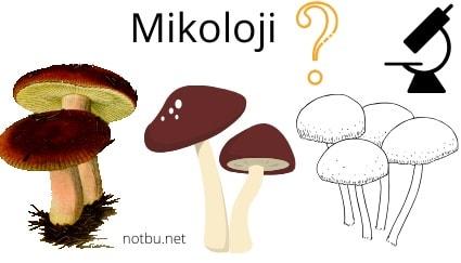 Mikoloji nedir