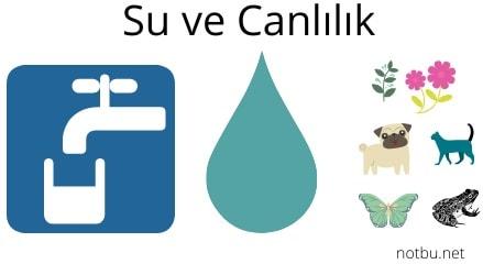 Suyun canlılar için önemi