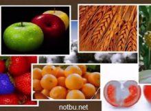 Biyoteknoloji örnekleri
