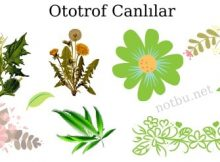 Ototrof canlılar