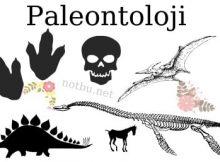 Paleontoloji nedir
