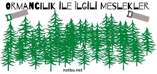 Ormancılık ile ilgili meslekler